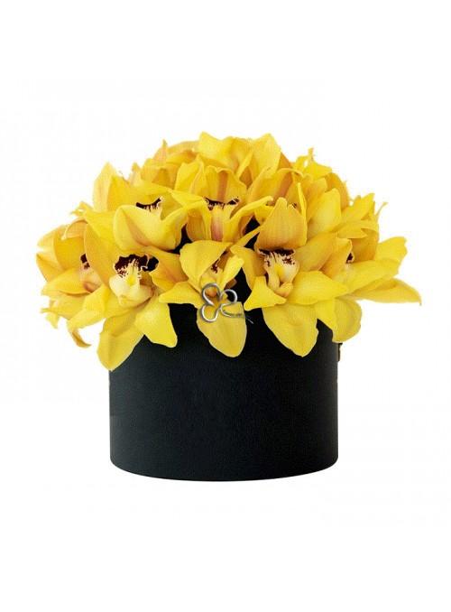 Sun orchids