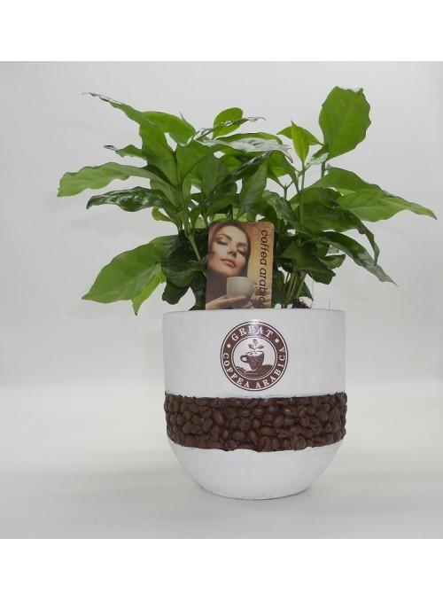 Coffee Stone