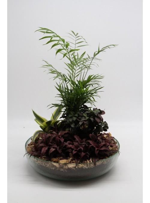Succulent Glass