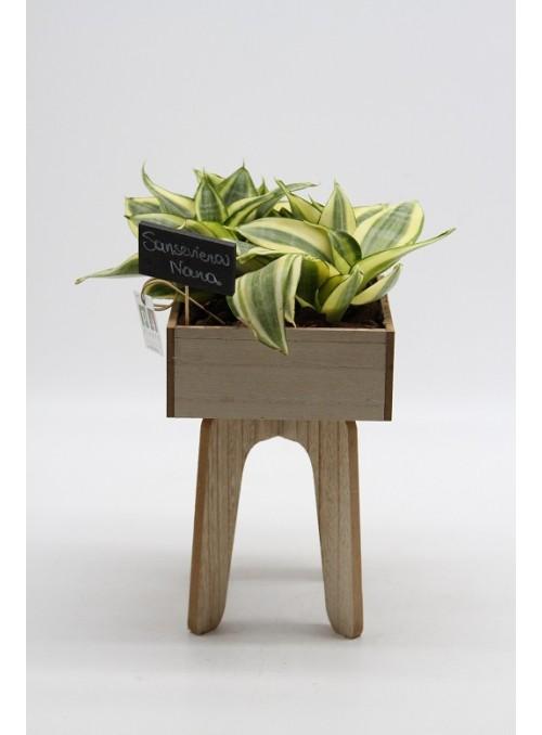 Sansevieria wood 2