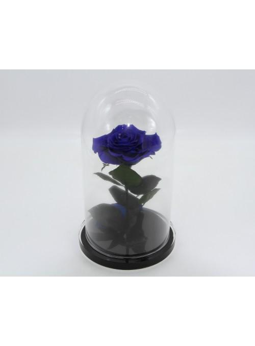 FlowerCube Rosa Incantata