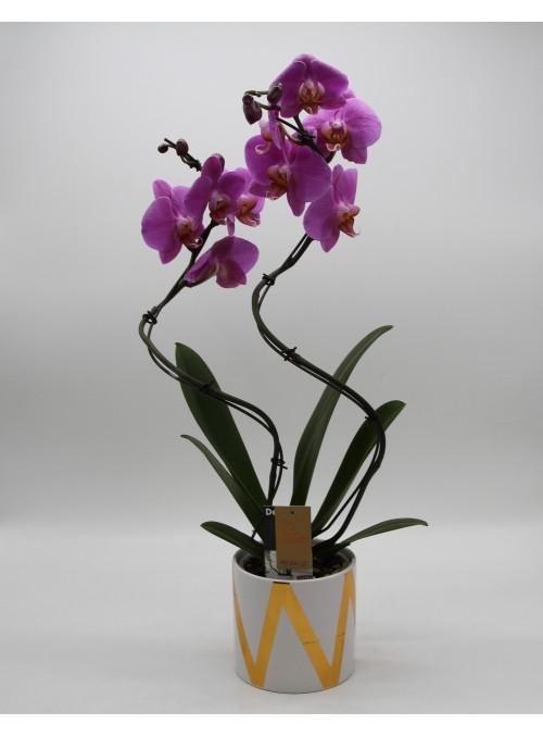 Phalenopsis vaso bianco e oro