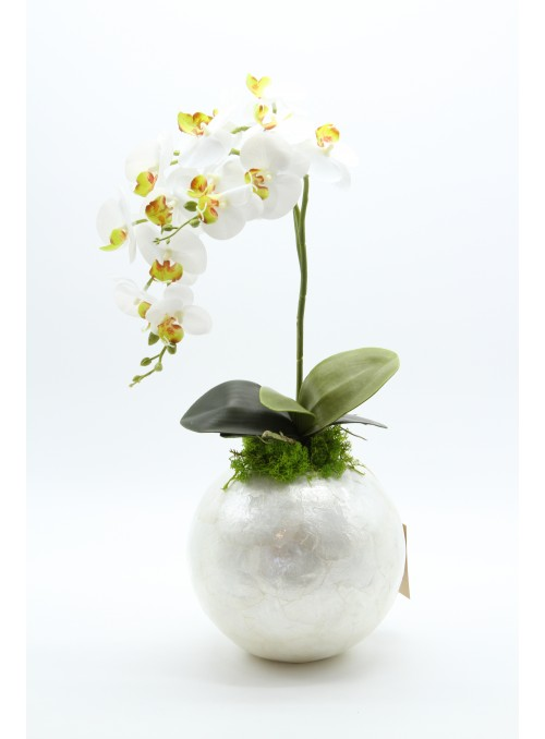 Orchids white pearl