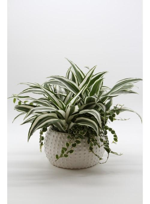 Mix di piante ornamentali in vaso di ceramica bianco