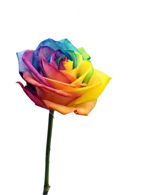 Fascio rose arcobaleno