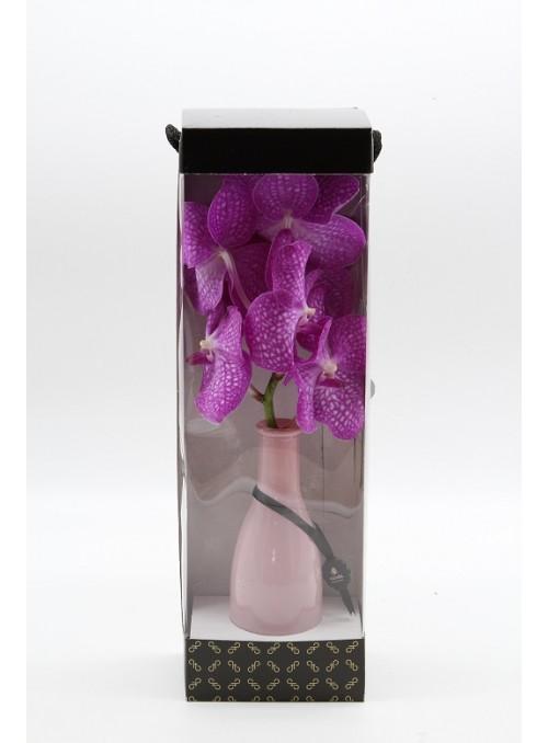 Orchidea Wanda bottle