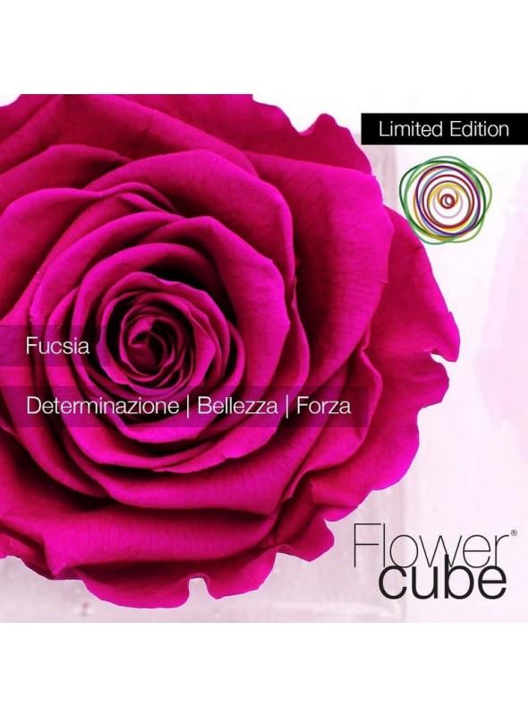 FlowerCube Rosa Fucsia Limited Edition