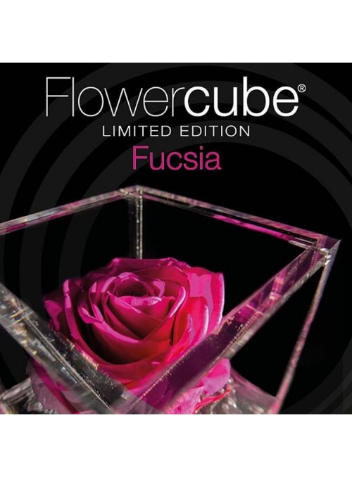 FlowerCube Rosa Fucsia Limited Edition