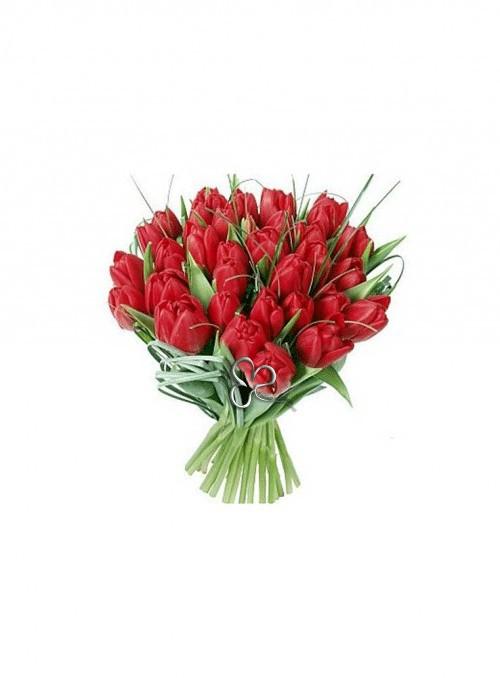 Tulip symphony